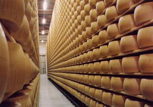 parmigiano-reggiano-forme-in-stagionatura_800x557